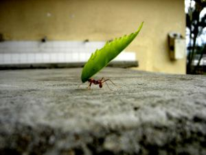 effort-invest-time-like-ant